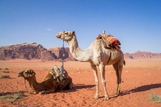 Otras cosas a descubrir en tu viaje a Jordania